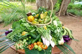 Small Vegetable Garden Ideas by Collection Backyard Vegetable Garden Photos Free Home Designs