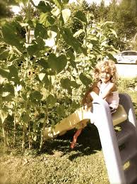 How To Build A Backyard Fort by How To Build A Sunflower House