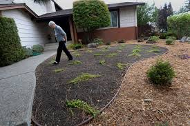 bay area homeowner fined for installing drought tolerant plants
