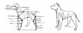 american pit bull terrier website heritage american pit bull terrier conformation standard