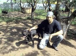 american pitbull terrier game bred bloodlines master blaster kennel пит були украины американский пит буль