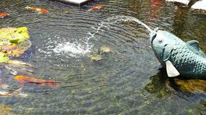 guide to the fashion island koi ponds in newport oc