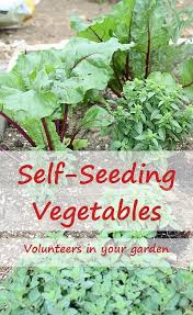 2043 best vegetable garden bloggers u0026 writers united images on