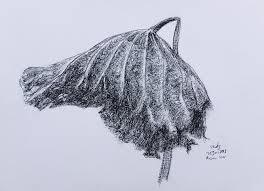 on dead lotus leaf drawing by rusmin noer