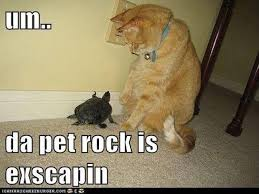 Pet Rock Meme - funny pictures of the day 87 pics funny pictures animal and turtle