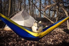 7 simple reasons why you need to ditch your tent for a hammock