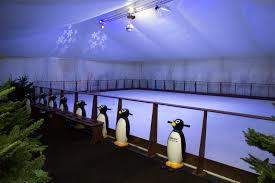 cornwall u0027s winter wonderland ice rink hire