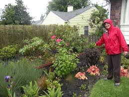 northwest native plants rainwater gardens preventing toxic runoff into puget sound knkx
