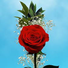 single delivery globalrose 25 s day single bouquet