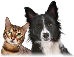pet insurance for cats dogore