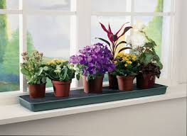 Window Sill Inspiration Creative Of Window Sill Plants Inspiration With Top 25 Best Window