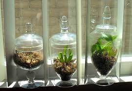 chic and simple carnivorous plant terrariums 10 steps with pictures