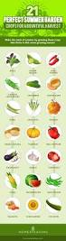 Vegetables You Can Regrow by 21 Perfect Summer Garden Crops For A Bountiful Harvest
