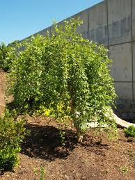 25 best what to plant trees and shrubs images on
