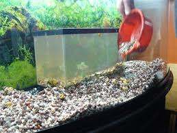 how to turn an aquarium into a terrarium garden org