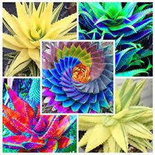 edible fruits 100pcs edible fruits aloe vera beauty cosmetics seeds edible plants