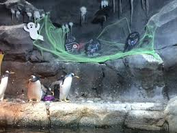 the penguin exhibit at the pittsburgh zoo decorated for halloween