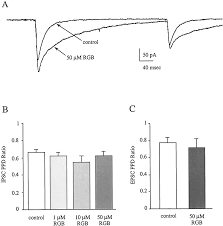 effects of the anticonvulsant retigabine on cultured cortical