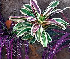 Unusual Tropical Plants - 172 best bromeliads images on pinterest plants gardening and