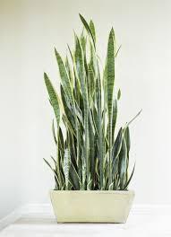 low light plants for bedroom best 25 low light houseplants ideas on pinterest indoor house