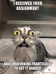 Working Cat Meme - i received your assignment and i m working frantically to get it