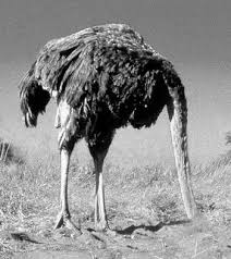 Ostrich Meme - the ostrich approach to social policy fredericiana