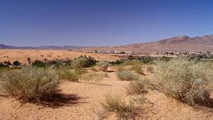Snow In Sahara Freak Weather Leaves Sahara Desert Covered In One Metre Of Snow