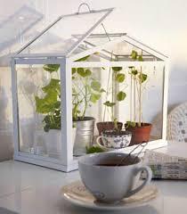 design beautiful indoor plants ideas ebizby design