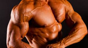 build bigger pecs and arms now fitness
