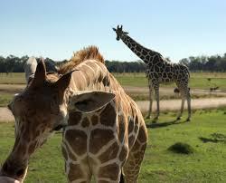 homepage global wildlife center