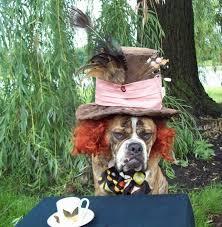 Disney Halloween Costumes Dogs 25 Diy Dog Costumes Ideas Dog Halloween