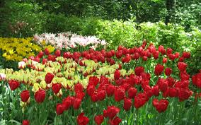 most beautiful flower gardens in the world tosxbkq decorating clear