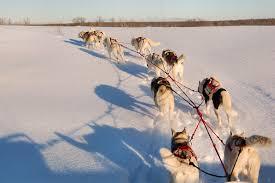 winter dog sled adventures b u0026b in bayfield wi