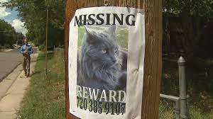 series of mysterious cat disappearances in lakewood cbs denver