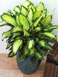 Low Light Indoor Flowers 20 Best Indoor Low Light Plants Images On Pinterest Low Light