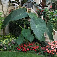 native plant landscaping in new england perennial shade gardens 3 tips for shade perennials official blog of park seed