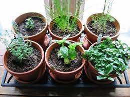 5 best plants grow indoors denver realestate denver