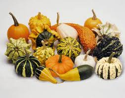 gourds ornamental small fruited sorts seeds 2 12 from chiltern