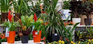 house plants u2013 haskins garden centres