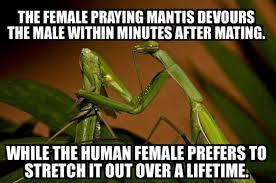 Praying Memes - female praying mantis vs human females meme