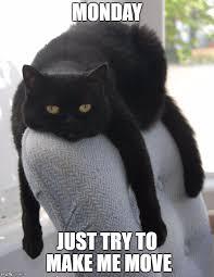 Monday Cat Meme - draped black cat imgflip