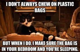 Tyler Perry Memes - 20 cat memes that are 100 funny memes cat and animal
