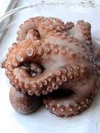octopus salad u2013 i u0027ve got cake