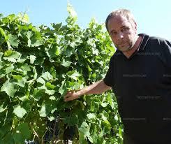 chambre d agriculture de vaucluse avignon vendanges un millésime 2013 qui s annonce prometteur