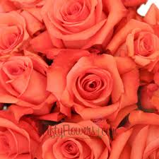 orange roses coral orange roses