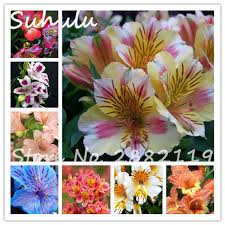 compare prices on beautiful lily flowers online shopping buy low