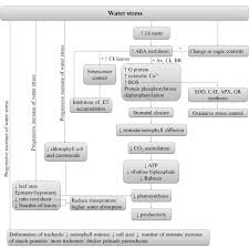water stress and agriculture intechopen