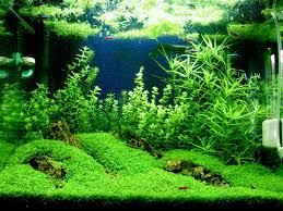 Small Tank Aquascaping Bottom Grass Plant For Small Tank Aquarium Ideas Pinterest