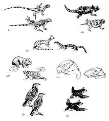 17 community and ecosystem ecology