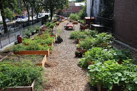long island native plant initiative community gardens grownyc